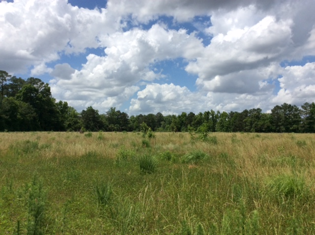Preparing your food plot sites will produce the best results