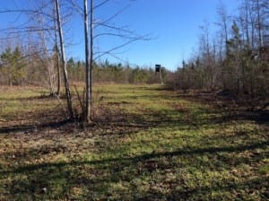 A well-designed food plot in Nash County
