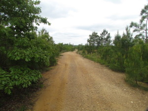 UNDER CONTRACT!  665 Acres of Hunting and Investment Land For Sale in Fluvanna County VA!