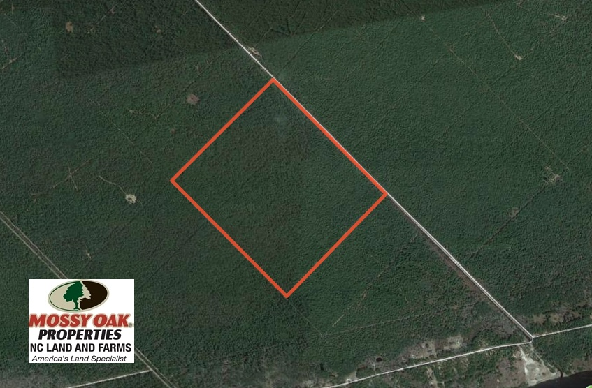 REDUCED!  180 Acres of Hunting Land For Sale in Hyde County NC!