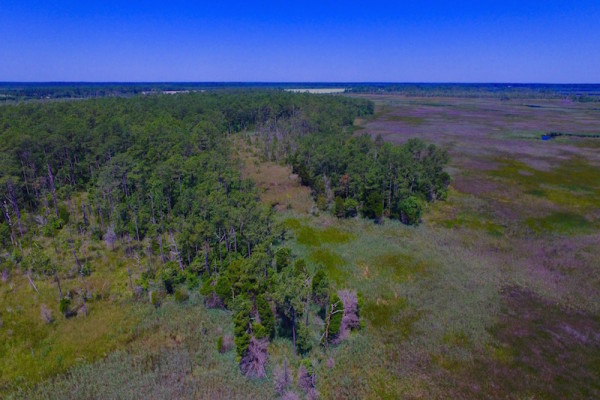 Under Contract 547 Ac Waterfront Hunting Land For Sale In
