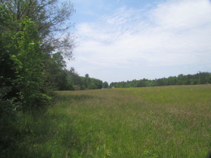 SOLD!  25 Acres of Hunting Land with Home Site For Sale in Fluvanna County VA!