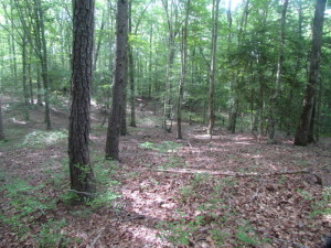 UNDER CONTRACT!  18 Acres of Hunting and Timber Land For Sale in Gloucester County VA!