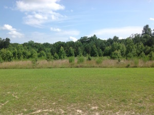 SOLD!  2.3 Acres of Hunting Land for Sale in Suffolk VA!