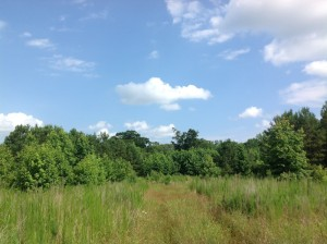 SOLD!  2.6 Acres of Hunting Land and Home Site For Sale in Suffolk VA!