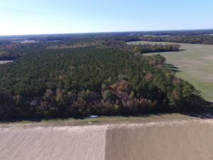 SOLD!  28 Acres of Hunting Land For Sale in Accomack County VA!