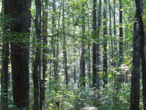 7.7 Acres of Hunting and Investment Land For Sale in Chesapeake VA!