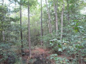 UNDER CONTRACT!  8.38 Acres of Timber and Hunting Land For Sale in Suffolk County VA!