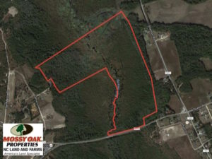 SOLD!  122 Acres of Duck Hunting Land For Sale in Robeson County NC!