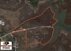 UNDER CONTRACT!  40.75 Acres of Waterfront Hunting Land for Sale in Gloucester County VA!