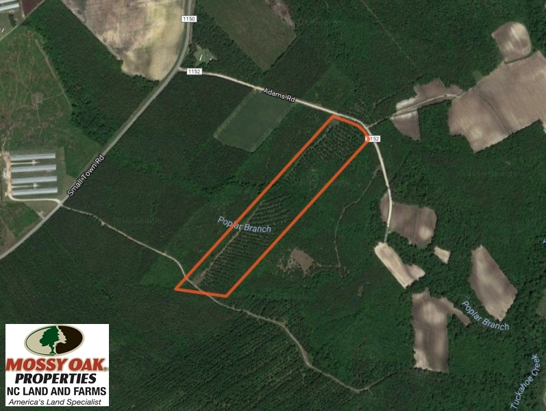 SOLD!  26 Acres of Timber Land For Sale in Jones County NC!