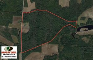 SOLD!  193 Acres of Farm and Timber Land For Sale in Columbus County NC!