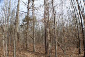 SOLD!  16.95 Acres of Residential Land For Sale in Powhatan County VA!