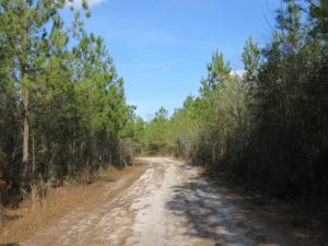 UNDER CONTRACT!  1383 Acres of Timber and Farm Land For Sale in Robeson County NC!