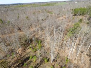 UNDER CONTRACT!  4.64 Acres of Recreational Land For Sale in Charlotte County VA!