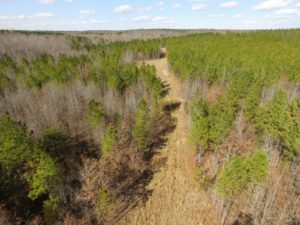 UNDER CONTRACT!  15 acres of Recreational Land or Sale in Charlotte County VA!