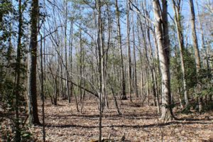 UNDER CONTRACT!  23.9 Acres of Recreational Land For Sale in Goochland Co VA!