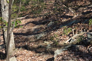 UNDER CONTRACT!  64.46 Acres of Hunting Land for Sale in Bedford VA!