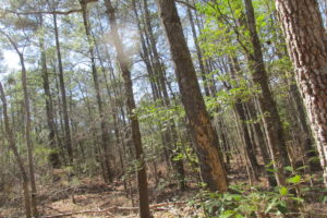 SOLD!  22 Acres of Land for Sale in Prince George County VA!