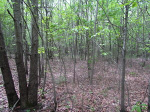 SOLD!  7.7 Acres of Residential Hunting Land For Sale in Greensville County VA!