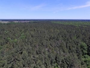 SOLD!  5 Acres of Residential Land For Sale in Dinwiddie County VA!