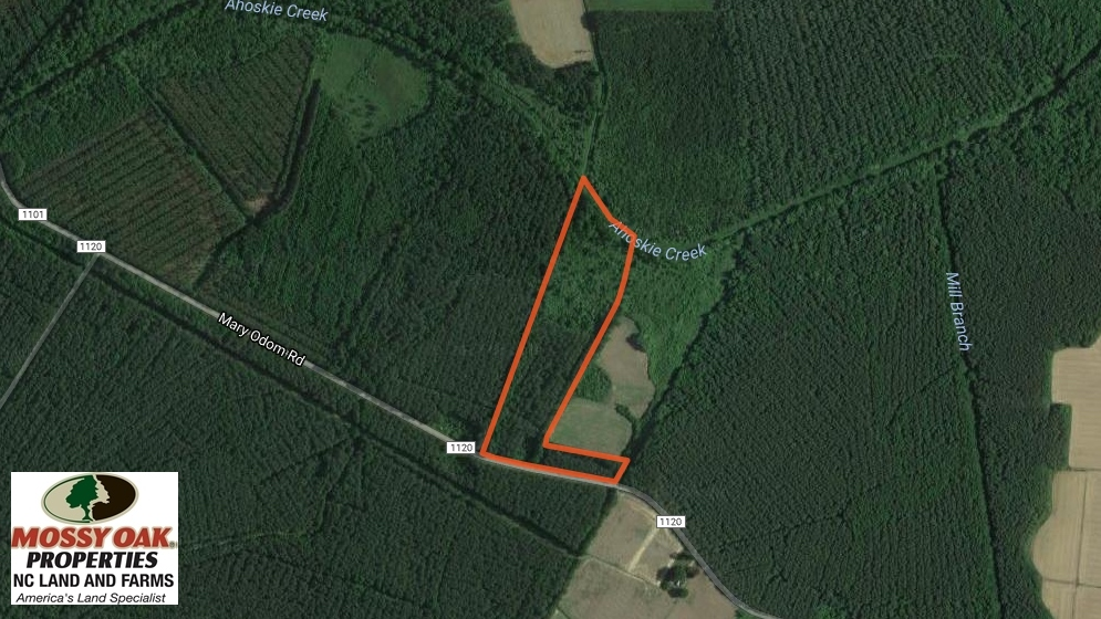 SOLD!  12.5 Acres of Hunting and Timber Land For Sale in Hertford County NC!