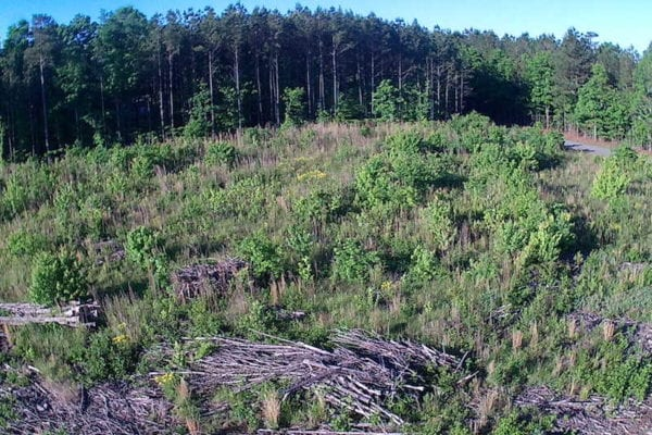 REDUCED! 10 Acres of Residential Hunting Land For Sale in Nash