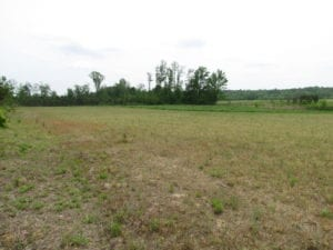 UNDER CONTRACT!  11 Acres of Farm Land For Sale in Southampton County VA!