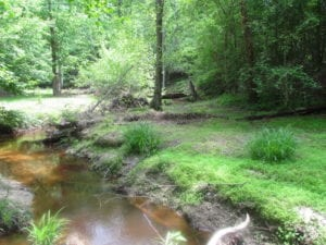 SOLD!  30 Acres of Hunting and Farm Land For Sale in Southampton County VA!