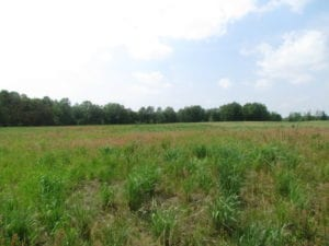 UNDER CONTRACT!  20 Acres of Hunting and Farm Land For Sale in Southampton County VA!