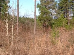 UNDER CONTRACT!  203 Acres of Hunting Land For Sale in Pittsylvania County VA!