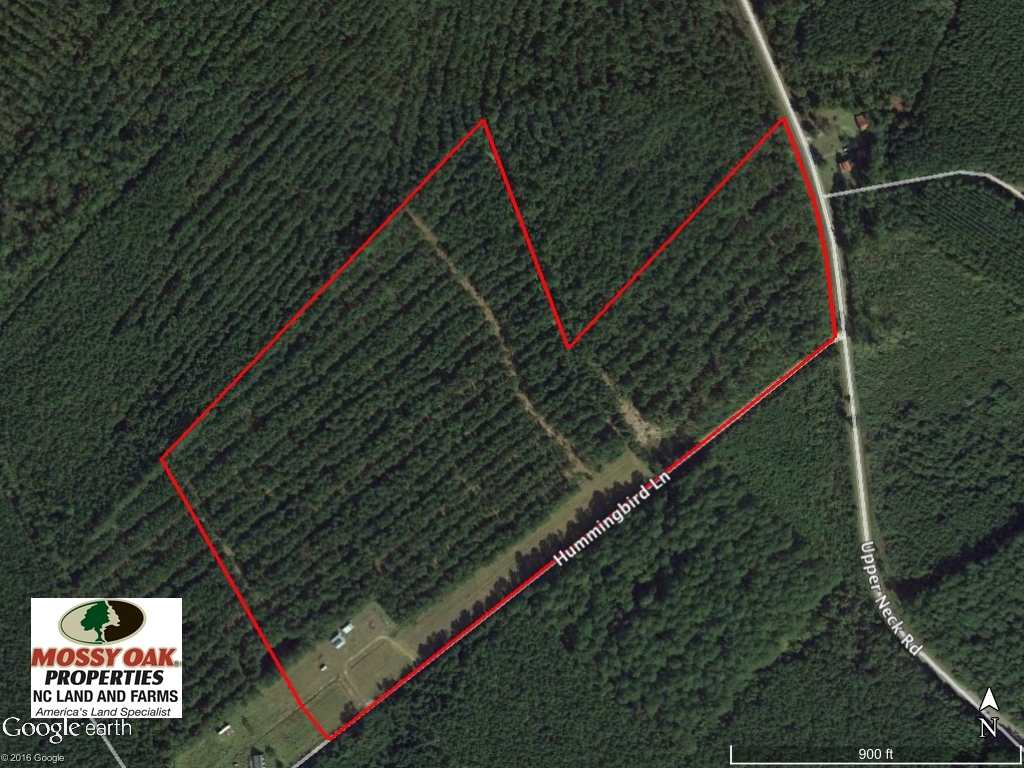 SOLD!  45 acre Hunting and Timber Land for Sale in Pamlico County NC!
