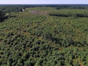 UNDER CONTRACT!  124.66 Acres of Hunting and Recreational Land For Sale in Lunenburg County VA!