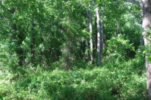 UNDER CONTRACT!  22 Acres of Hunting Land For Sale in Greensville County VA!