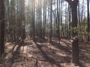 SOLD!  62 Acres of Hunting Land with Home Site For Sale in Suffolk Virginia!