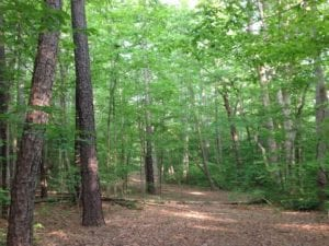 SOLD!  11 Acres of Hunting Land for Sale in Brunswick County VA!