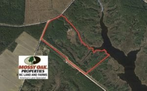UNDER CONTRACT!  50 Acres of Waterfront Hunting Land for Sale in Hyde County NC!
