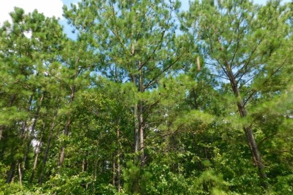 REDUCED! 30 Acres of Hunting and Timber Land For Sale in