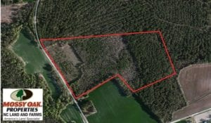 SOLD!  38 Acres of Hunting and Timber Land for Sale in Duplin County NC!