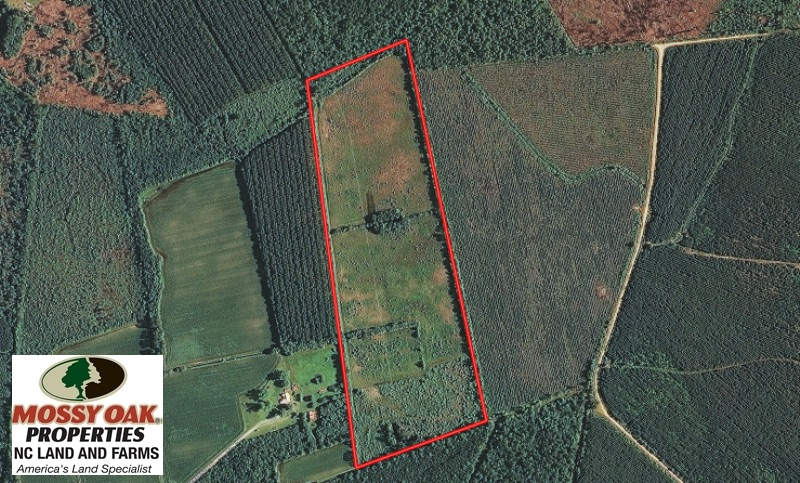 SOLD!  46 Acres of Timber and Hunting Land for Sale in Columbus County NC!