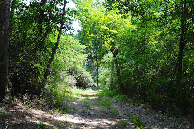 Sold 49 Acres Of Hunting And Timber Land For Sale In