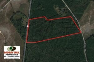 SOLD!  51.44 Acres of Hunting and Timber Land For Sale in Halifax County NC!