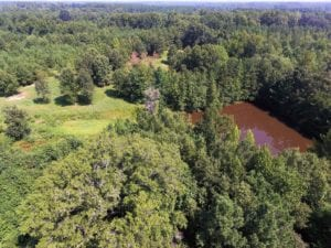 UNDER CONTRACT!  37 Acres of Hunting and Recreational Land For Sale in Brunswick County VA!