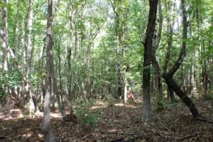 UNDER CONTRACT!  55.86 Acres of Recreational and Hunting Land For Sale in Goochland County VA!