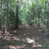 UNDER CONTRACT! 104 Acres of Hunting and Timber Land For Sale in Surry County VA!