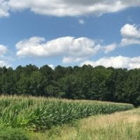 SOLD!  25 Acres of Farm and Timber Land For Sale in Perquimans County NC!