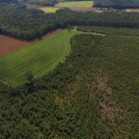 PENDING!  57.3 Acres of Timber and Farm Land For Sale in Wilson County NC!