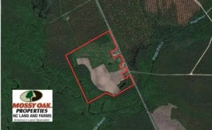 SOLD!  50.81 Acres of Hunting Land For Sale in Columbus County NC!