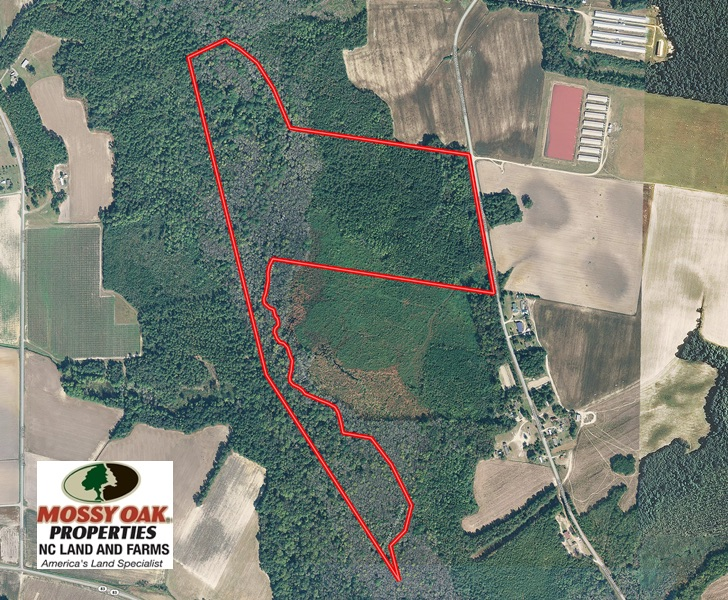 SOLD!  52 Acres of Hunting and Timber Land For Sale in Robeson County NC!