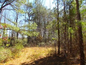 UNDER CONTRACT!  15 Acres of Hunting and Investment Land For Sale in Suffolk VA!